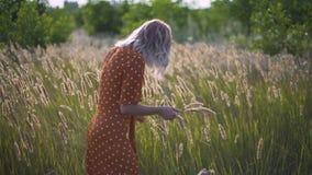 Den härliga unga kvinnan går i fältet samlar en bukett av blommor och spikelets Stående av den attraktiva kvinnlign på gräs på su stock video