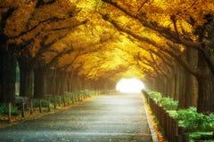 Den härliga vägbanan under träd välva sig i höst Royaltyfria Bilder