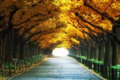 Den härliga vägbanan under träd välva sig i höst Royaltyfri Fotografi