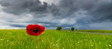 Den härliga vallmo blommar på härlig himmelbakgrund Arkivbilder