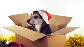 Den härliga valphunden i jultomtenhatt sitter i en kartong med garneringar för jul och för det nya året Arkivbilder