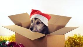 Den härliga valphunden i jultomtenhatt sitter i en kartong med garneringar för jul och för det nya året Fotografering för Bildbyråer