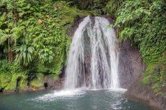 Den härliga vattenfallet i en rainforest applåderar hjälpEcrevisses Arkivbild