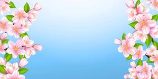 Härligt förgrena sig av Sakura Arkivbild