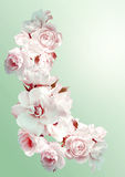 Den härliga vertikala ramen med en bukett av vita rosor med regn tappar Tappningtoningbild Royaltyfri Fotografi
