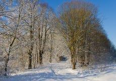 Den härliga vintergränden parkerar Arkivbild
