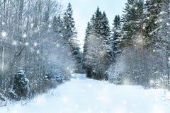 Den härliga vintern landscape Royaltyfri Fotografi