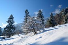 Den härliga vintern landscape Fotografering för Bildbyråer