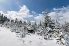Den härliga vintern landscape Royaltyfria Foton