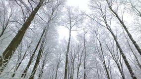 Den härliga vintern landscape