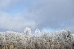 Den härliga vintern landscape Royaltyfria Bilder