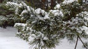 Den härliga vintern landscape Abstrakt pinjeskogbakgrund Royaltyfria Bilder