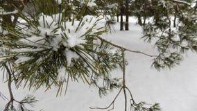 Den härliga vintern landscape Abstrakt pinjeskogbakgrund Arkivfoton