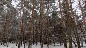 Den härliga vintern landscape Abstrakt pinjeskogbakgrund Fotografering för Bildbyråer