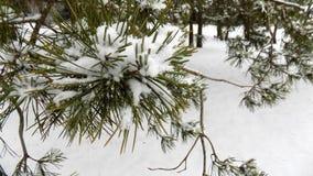 Den härliga vintern landscape Abstrakt pinjeskogbakgrund Royaltyfri Bild