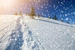 Den härliga vintern landscape Brant bergkullelutning med banan och att skida spår i vit djup snö, gröna prydliga träd som är stor royaltyfri bild