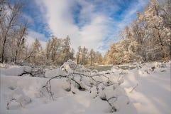 Den härliga vintern landscape räknade snowtrees Royaltyfria Foton