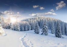 Den härliga vintern landskap Royaltyfri Bild
