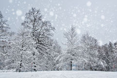 Den härliga vintern landskap med snow täckte trees arkivfoton