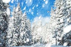 Den härliga vintern landskap med snow täckte trees Royaltyfri Foto