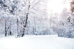 Den härliga vintern landskap med snow täckte trees lyckligt nytt år glad jul arkivfoton