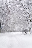 Den härliga vintern parkerar landskap från Sofia, Bulgarien arkivfoton