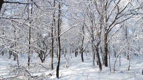 Den härliga vintern parkerar med olika träd Arkivbilder