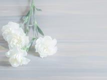 Den härliga vita nejlikan blommar på träbakgrund Royaltyfri Foto