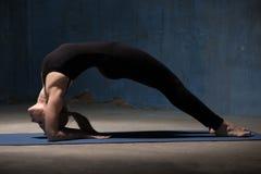 Den härliga yogakvinnan som gör Dvi Pada Viparita Dandasana, poserar Royaltyfri Foto