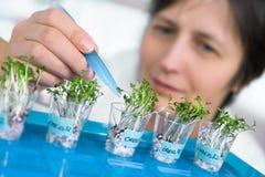 Den höga forskaren eller tech väljer kryddkrassegroddar för att testa Arkivfoton