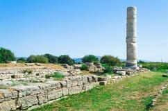 Den högsta kolonnen i Heraion Arkivbild