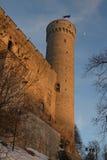 Det medeltida baltiska slottet och högväxt eller Pikk Hermann står hög Arkivbild