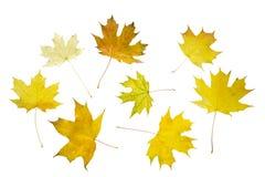 den höstliga dagen låter vara melankolisk yellow Royaltyfria Bilder