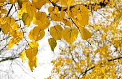 den höstliga dagen låter vara melankolisk yellow Arkivbild