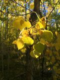 den höstliga dagen låter vara melankolisk yellow Royaltyfri Fotografi