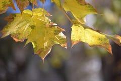 den höstliga dagen låter vara melankolisk yellow Royaltyfria Foton