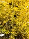 den höstliga dagen låter vara melankolisk yellow Arkivbilder