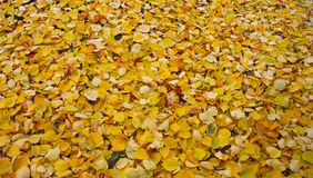 den höstliga dagen låter vara melankolisk yellow Parkera skoghöstlandskapet arkivbilder
