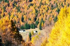 Den höstliga skogen visar dess färg Arkivfoton