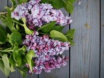 Den h?rliga lila blomman i purpurf?rgat och att blomma p? kan fotografering för bildbyråer