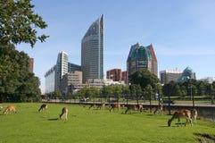 Den Haag Stockfotos