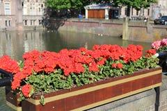 Den Haag Het lopen in het beautyful park stock foto's
