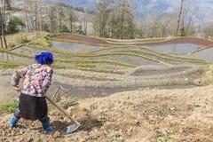 Den Hani bonden som arbetar på ett ris, terrasserar i YuanYang, Yunnan, Kina Hani är en av de 56 minoriteterna i Kina och är infö Fotografering för Bildbyråer