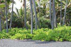 Den Hawaii stranden med gömma i handflatan träd Royaltyfri Fotografi