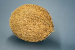 den hela kokosnöten lägger på ett mörkt - blå bakgrund arkivfoton