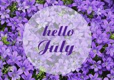 Den Hello Juli hälsningen på naturlig klockblomma blommar bakgrund sommar för snäckskal för sand för bakgrundsbegreppsram Arkivfoton