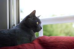 Den hem- katten vilar Arkivbilder
