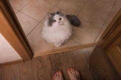 Den hemlösa fluffiga katten önskar att gå hem Arkivbilder