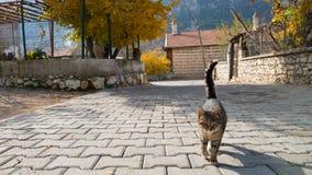 Den hemlösa härliga unga katten går in mot kameran Byliv i Turkiet ÄLSKLINGS- VÄNSKAPSMATCH arkivbilder