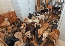 Den hemlösa hundkapplöpningen som kastas av folk Royaltyfri Bild